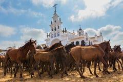 Troupeau de chevaux dans l'avant le baptême de attente d'église Photos libres de droits
