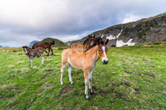 Troupeau de chevaux dans la montagne Images stock