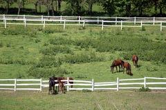 Troupeau de chevaux dans le corral à la ferme Photographie stock libre de droits