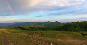 Troupeau de chevaux dans les montagnes à l'aube banque de vidéos