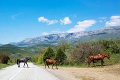 Troupeau de chevaux dans les montagnes Photo stock