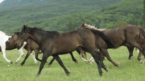 Troupeau de chevaux fonctionnant sur The Field clips vidéos