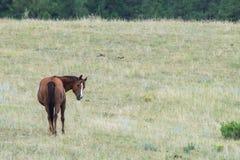 Troupeau de chevaux frôlant dans le domaine Photo stock