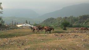 Troupeau de chevaux marchant par un pré dans la campagne banque de vidéos