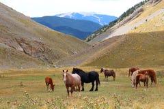 Troupeau de chevaux sauvages détendant dans les montagnes de Pyrénées, Catalogne, Espagne Images stock