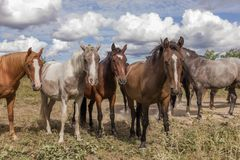 Troupeau de chevaux sur la terre de pâturage photographie stock libre de droits