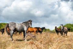 Troupeau de chevaux sur le champ Photographie stock