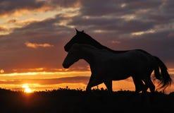 Troupeau de chevaux sur le coucher du soleil Images libres de droits