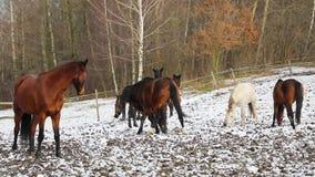 Troupeau de chevaux sur le pré banque de vidéos