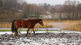Troupeau de chevaux sur le pré clips vidéos