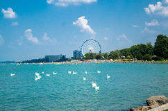 Troupeau de cygne sur le lac Balaton dans Siofok avec la grande roue en Th Photo libre de droits