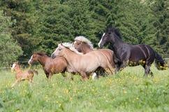 Troupeau de fonctionnement de chevaux photo libre de droits