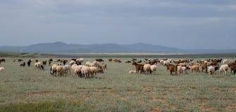 Troupeau de frôler des moutons et des chèvres photographie stock libre de droits
