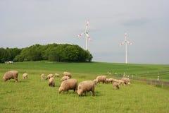 Troupeau de moutons photographie stock libre de droits