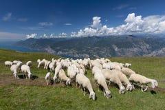 Troupeau de moutons avec le berger frôlant sur le plateau de Monte Baldo, Malcesine, Lombardie, Italie photo stock