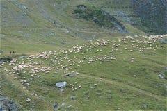 Troupeau de moutons de montagnes de Transfagarasan Photographie stock