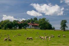 Troupeau de moutons frôlant sur l'herbe verte photos libres de droits