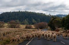 Troupeau de moutons sur la route Photographie stock libre de droits