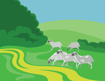 Troupeau de moutons, vue de campagne Photos libres de droits