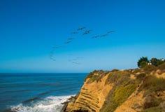 Troupeau de pélican au-dessus du Pacifique photo stock