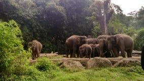 Troupeau de photo d'éléphants Image libre de droits