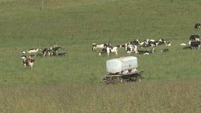 Troupeau de vaches sur le pré clips vidéos