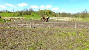 Troupeau des chevaux sur le pré au printemps clips vidéos