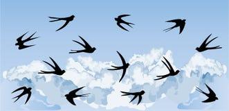 Troupeau des hirondelles volant de l'arbre de floraison Photographie stock