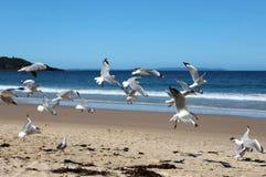 Troupeau des mouettes sur la plage Image stock