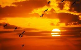 Troupeau des mouettes volant au soleil Photo libre de droits