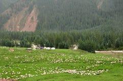 Troupeau des moutons sur les prés avec et la forêt Images stock