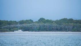 Troupeau des oiseaux marins Photos libres de droits