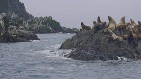 Troupeau des otaries se reposant sur l'île rocheuse et flottant dans l'eau d'océan banque de vidéos