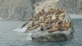 Troupeau des otaries sur la falaise rocheuse en mer Faune et animal des mers du nord banque de vidéos