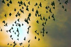 Troupeau des pigeons en ciel de coucher du soleil Photo stock