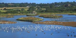 Troupeau des waterbirds dans le marais de trou noir Images libres de droits