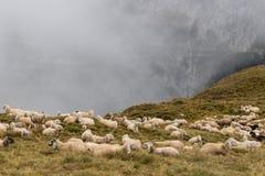 Troupeau du repos de moutons Image stock