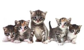 Troupeau mignon de chatons sur un fond blanc Images stock