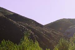 Troupeau sur l'arête de montagne Photographie stock libre de droits