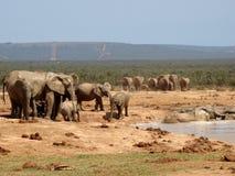 Troupeaux d'éléphant Image stock