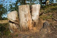 Trous d'insecte dans un tronçon d'arbre de décomposition Images libres de droits
