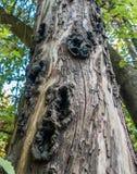 Trous dans le tronc d'arbre photo stock