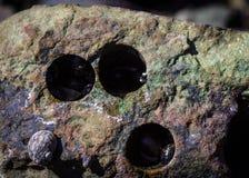 Trous ronds parfaits dans une roche de mer ou une pierre de mer provoquée par des coquilles de mer Fermez-vous vers le haut du ti photo stock