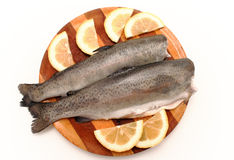 Free Trout Stock Image - 14069941