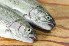 Trout Royalty Free Stock Photography