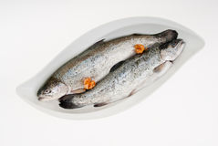 Trout Stock Photos