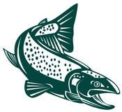Trout. Vector art of a trout isolated on white background Royalty Free Stock Images