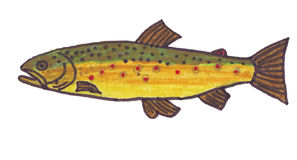 Trout Stock Photography