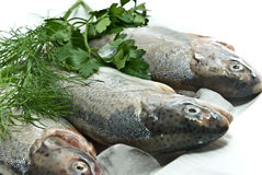 Trout. Fresh trout for a tasty dish stock photo