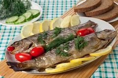 Trout baked in the oven Stock Images